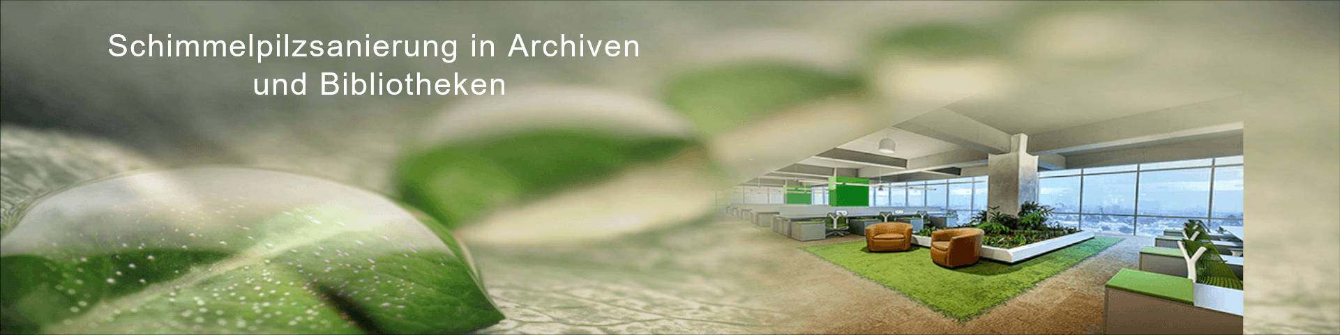 Schimmelpilzsanierung in Archiven und Bibliotheken
